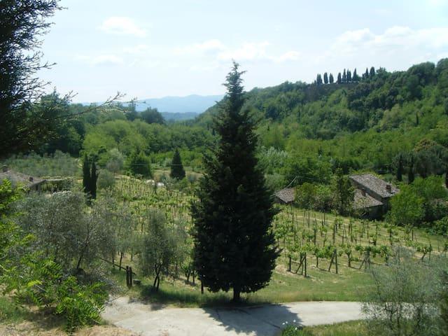 Road to Molino