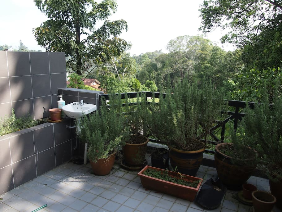 The balcony garden, planted with lavender and rosemary