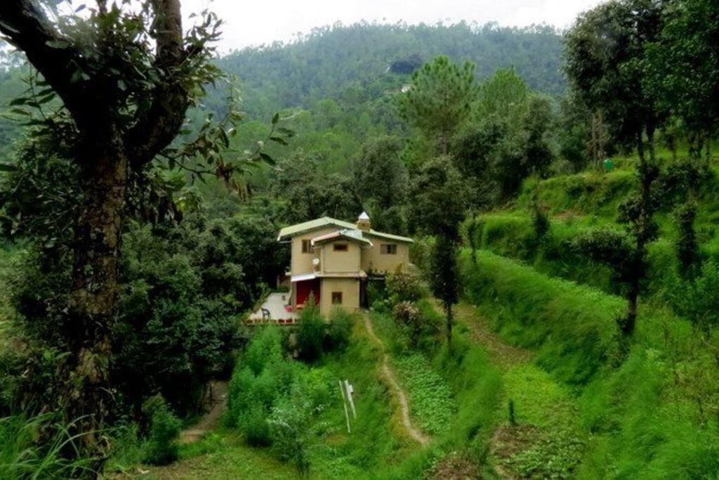 kafalia in the monsoon