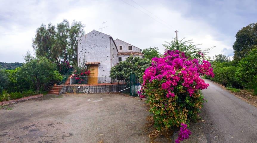 Affitasi casa tra Aloe e  Limoni