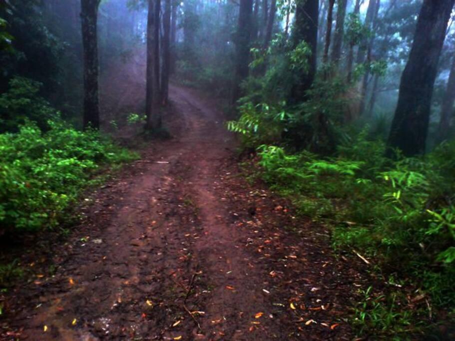 Jungle safari drive through the giant rainforest to the Kyoto