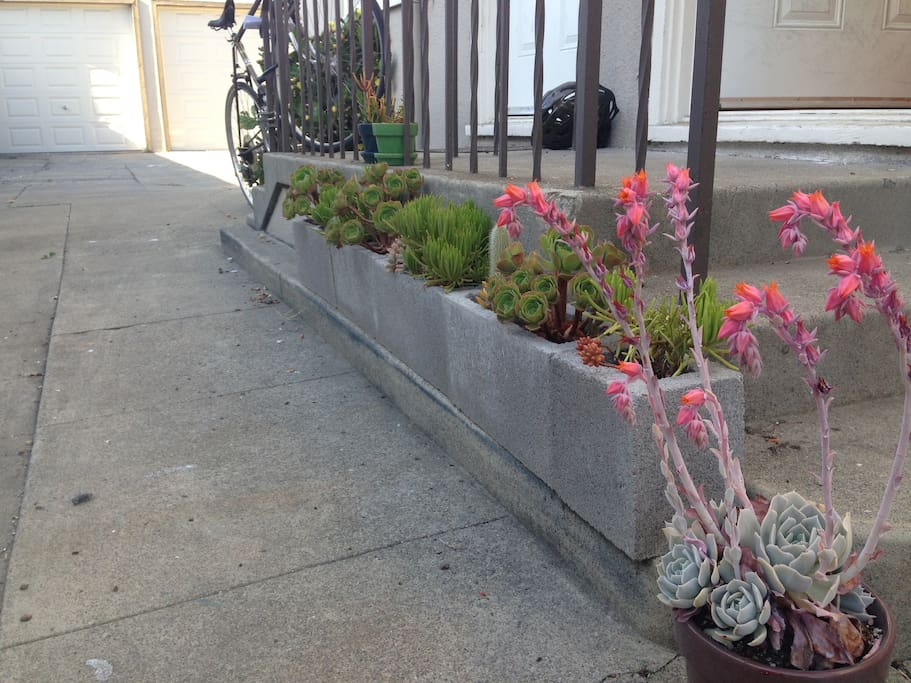 Enjoy the front stoop with a rainbow of succulents!