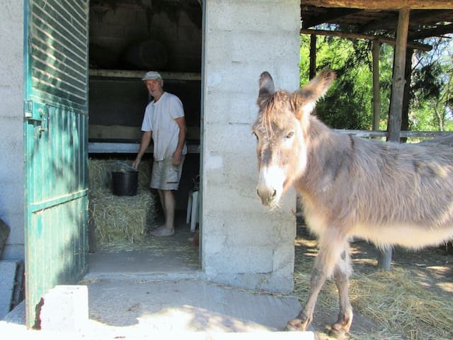 Our donkey, the compost manager