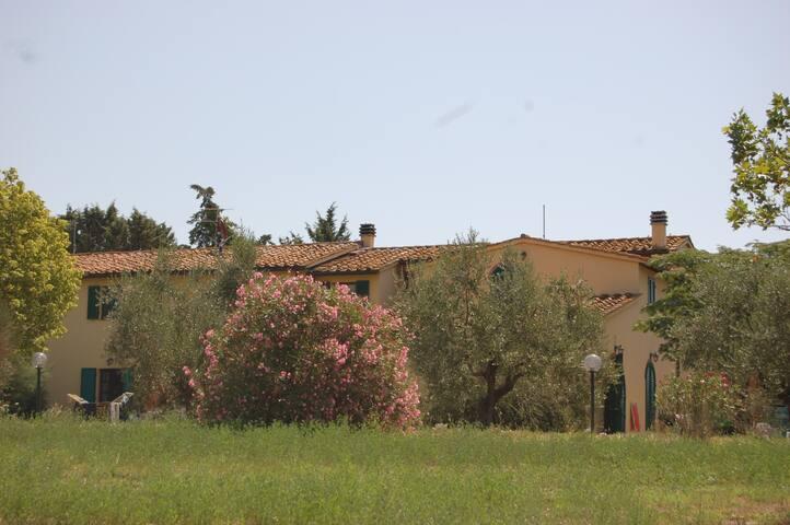 IL CERRONE 1 - Fauglia - Apartament