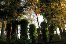 Backyard ivy pillars