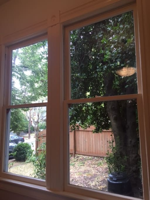 View from guest room (there are temporary paper blinds in place now)