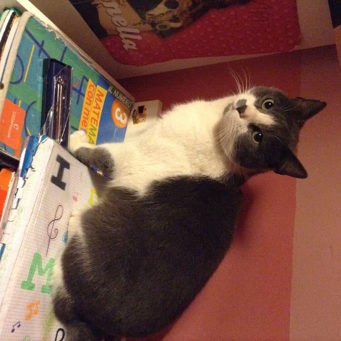 Our cat Romeo