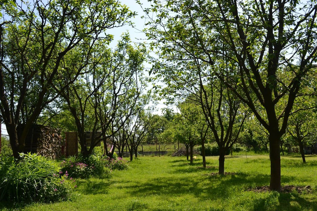 Our large garden, with apple and plum trees.
