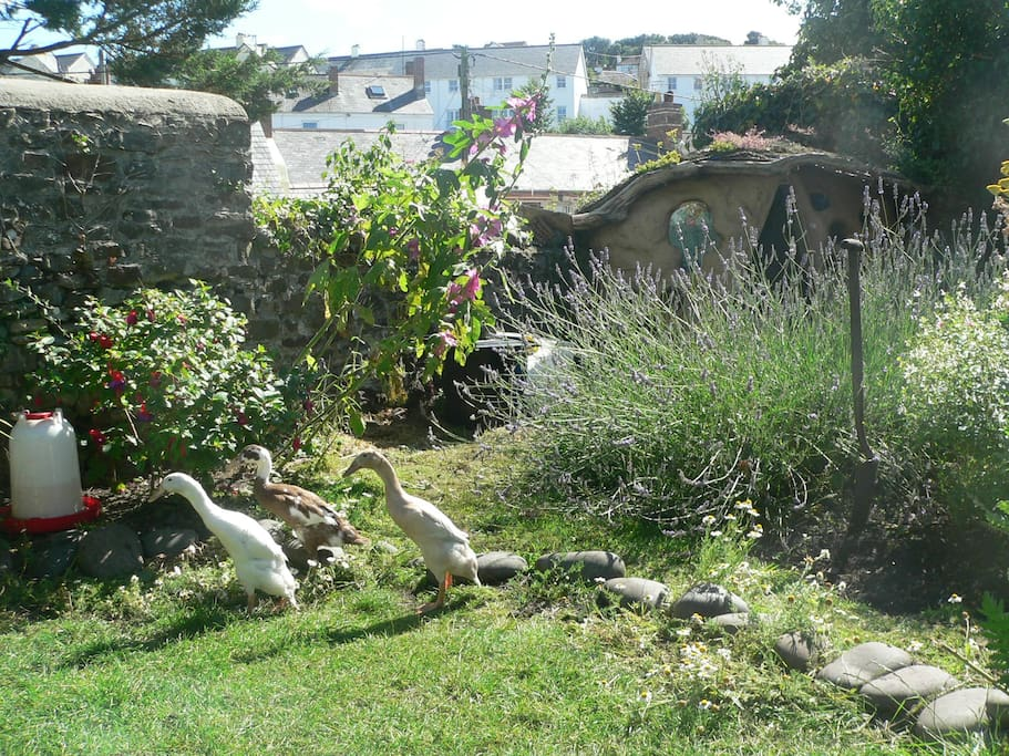 Communal gardens with our lovely ducks.