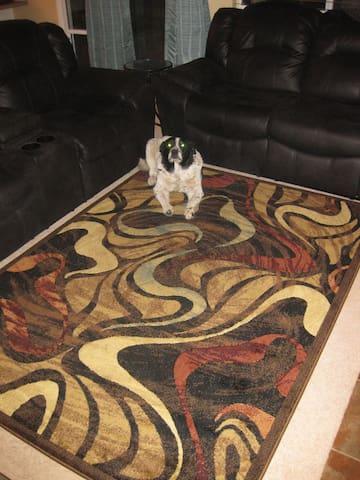 My dog Connor on rug.