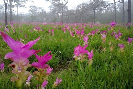 บ้านทุ่งดอกกระเจียวไฮแลนด์รีสอร์ท - อำเภอ เทพสถิต จังหวัด ชัยภูมิ ประเทศไทย
