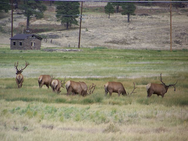 Elks seen from our back yard