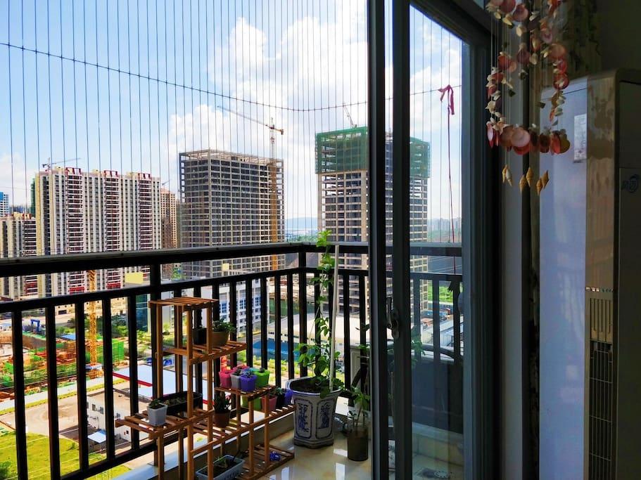 一楼阳台和养的小植物