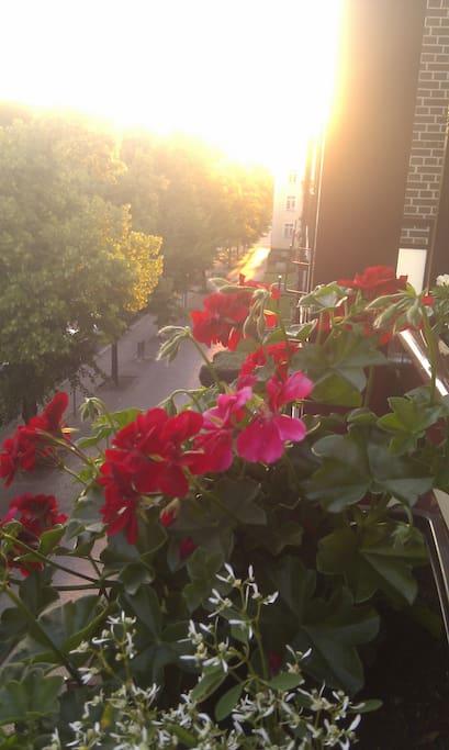 Sonniger Morgen auf dem Balkon