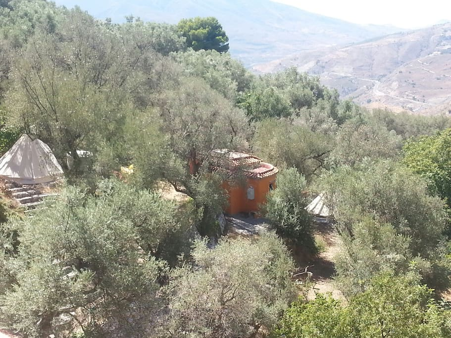 Set on an acre of Olive and fruit trees