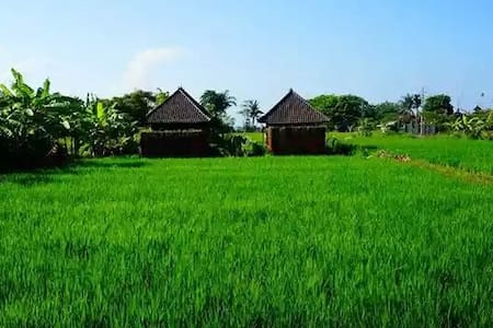 keramas surfcamp bali at rice paddy