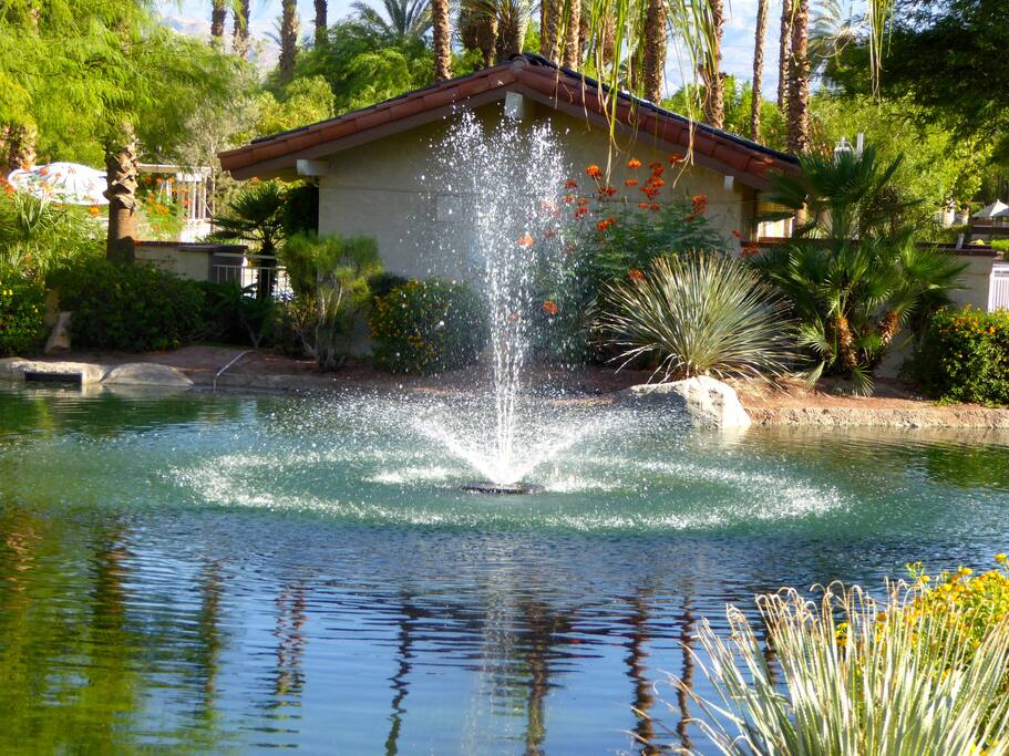 Waterfall in back of pool house