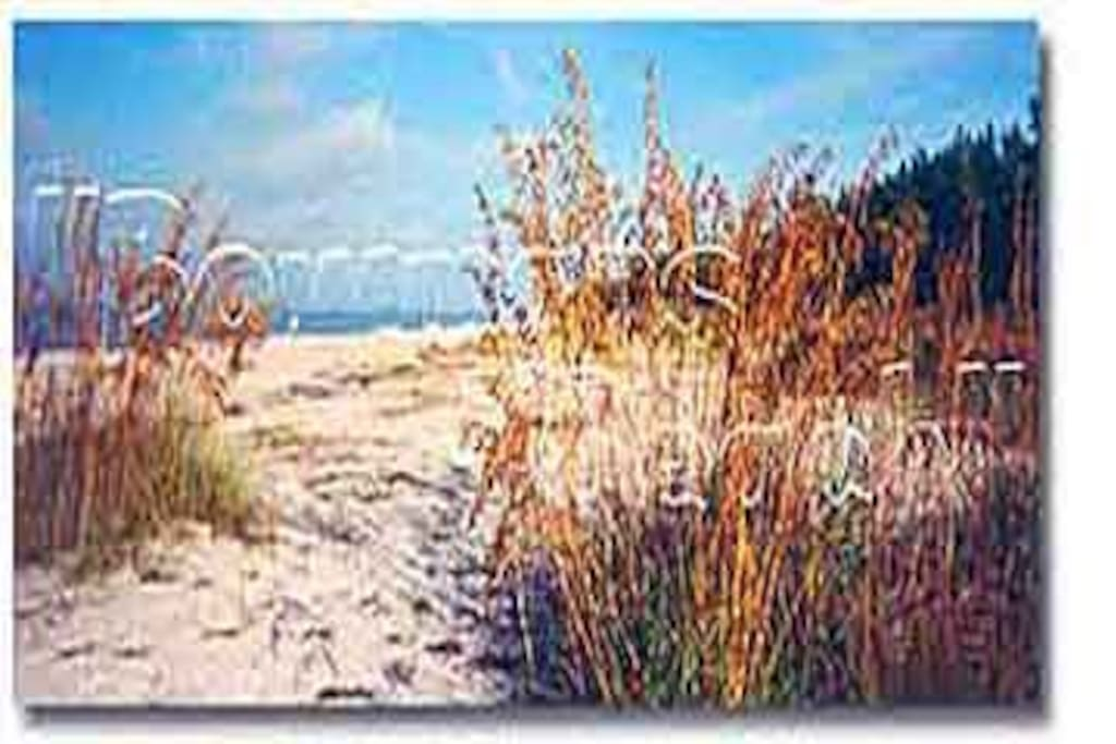 Sea Oats on beach