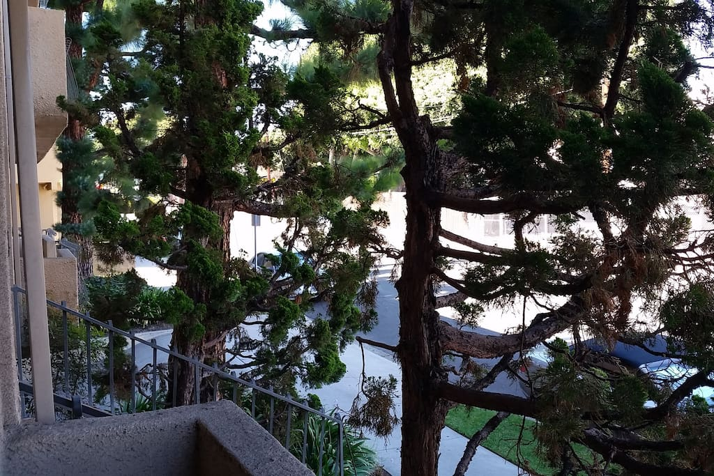 Patio protected by lush trees offer privacy as well as an outdoor escape.