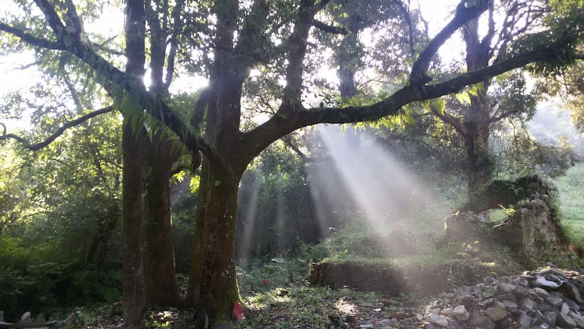 The Camphor Tree, Naukuchiatal - Bhimtal - Bed & Breakfast