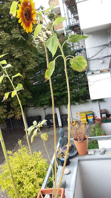 Bitte die Pflanzen auf dem Balkon mit verpflegen :)
