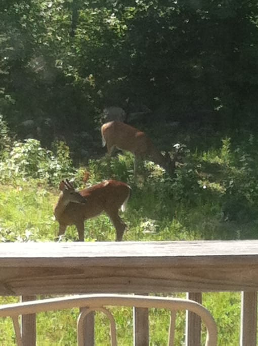 frequent visits from the local deer right outside the door