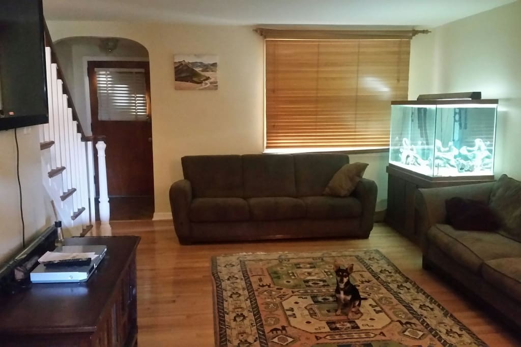 125 gallon aquarium.. chihuahua not included.. 2 full size comfy couches