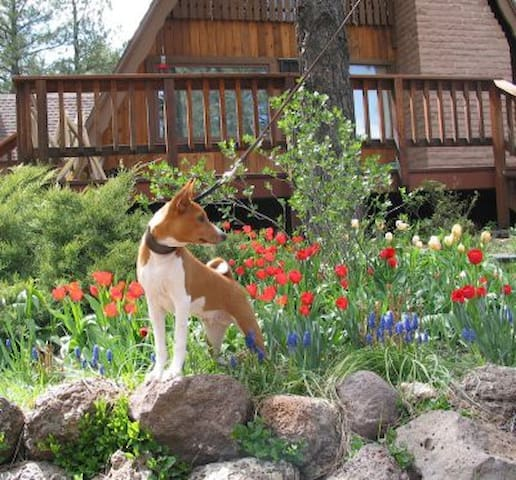Front garden in bloom with Basenji