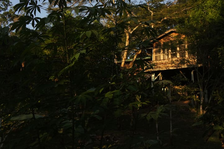 Cozy Cabin at Monkeyfalls, Close to San Ignacio