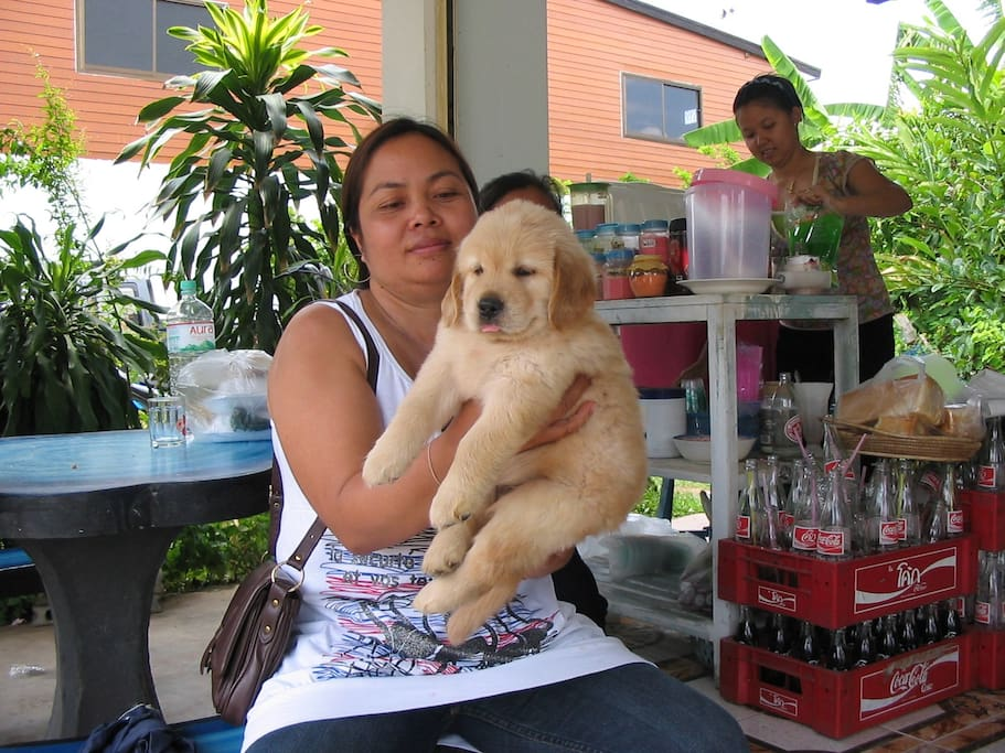 Ms Noi is the helping hand of Mrs Wan, the dog's not ours :)