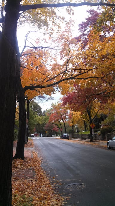 This is what the street looks like in the fall.