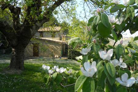 Dependence romantica tra le colline marchigiane - Maiolati Spontini - Appartement