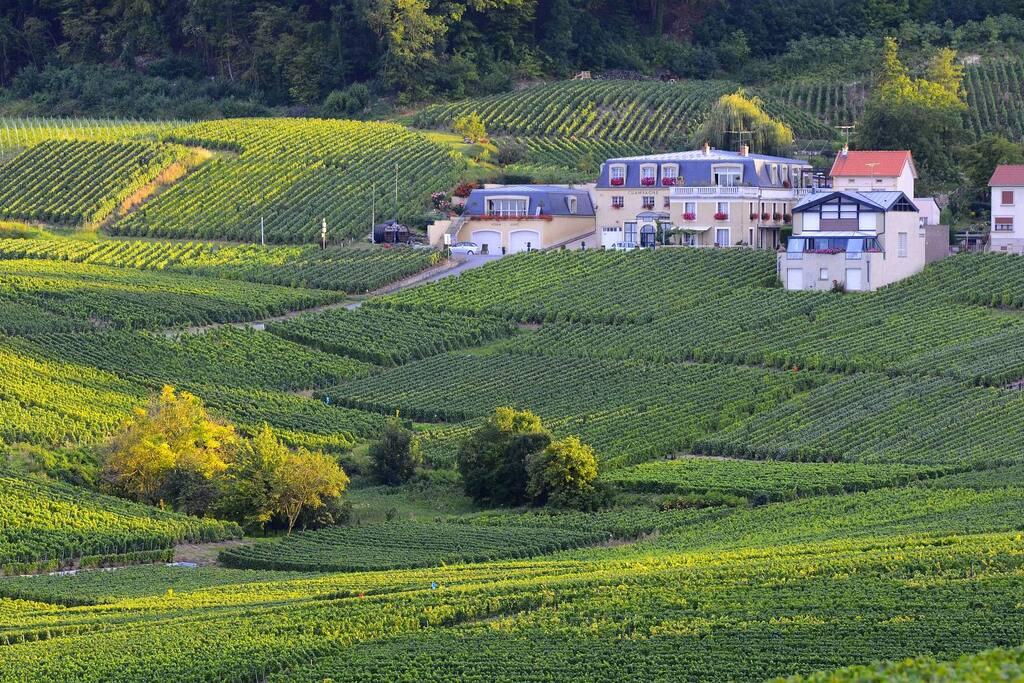Maison au coeur du vignoble