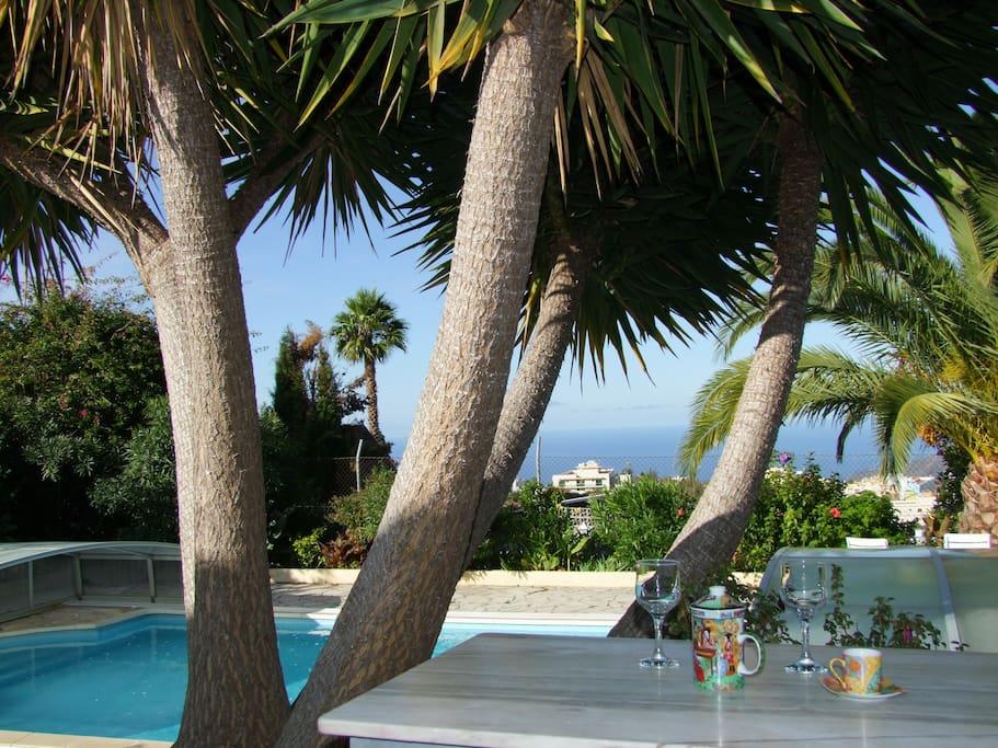 Finca sambal haush lfte papaya ca 70qm pool for The garden pool el paso