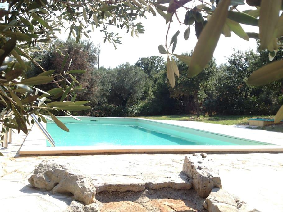 Piscina privata salina con zona solarium in giardino d'ulivi secolari