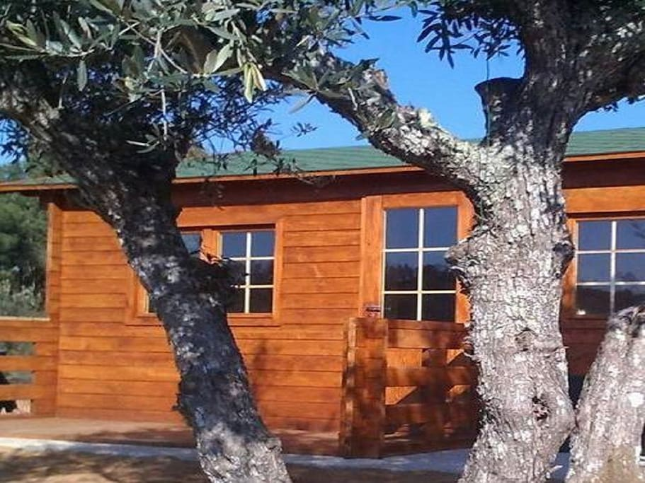 A casa de madeira situa-se no topo da colina e é enquadrada por oliveiras.