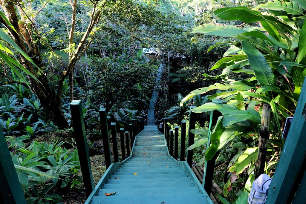 Wooden walkway from the road to the house