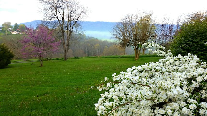 view of the back yard from April with morning ground fog