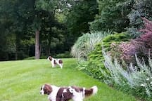 Jerri (our recently departed pup) and Mugsy staring at the view