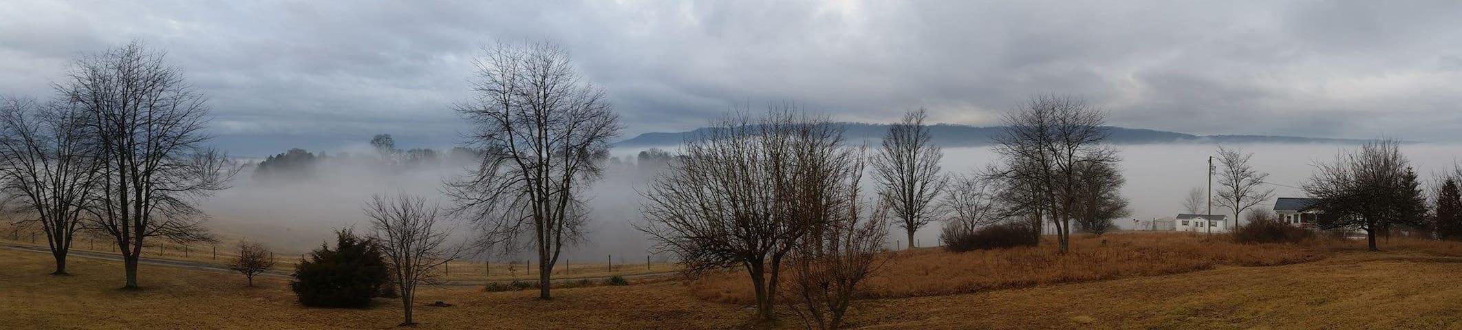 Winter cloud forest morning fog