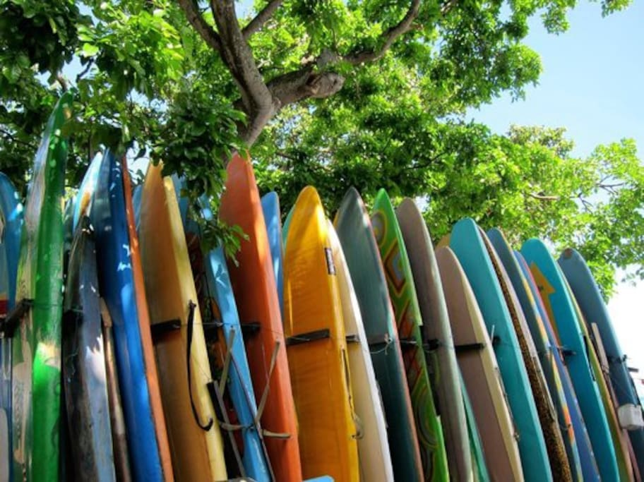 Surfboard Rentals are avialable by the hour and by the day.  As well as private surf lessons!