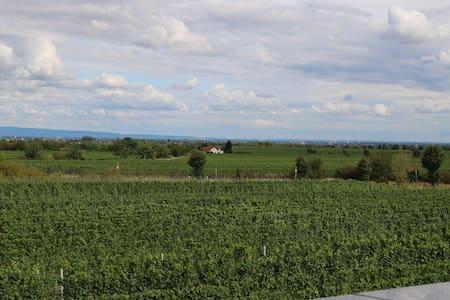 Panoramablick übers Rebenmeer - Bad Dürkheim