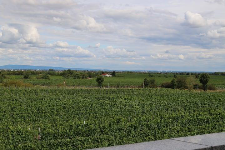 Panoramablick übers Rebenmeer