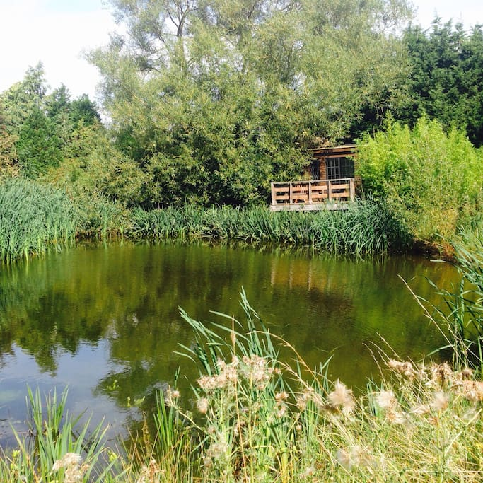 cabin sits on the edge of a large pond, full of native wildlife.