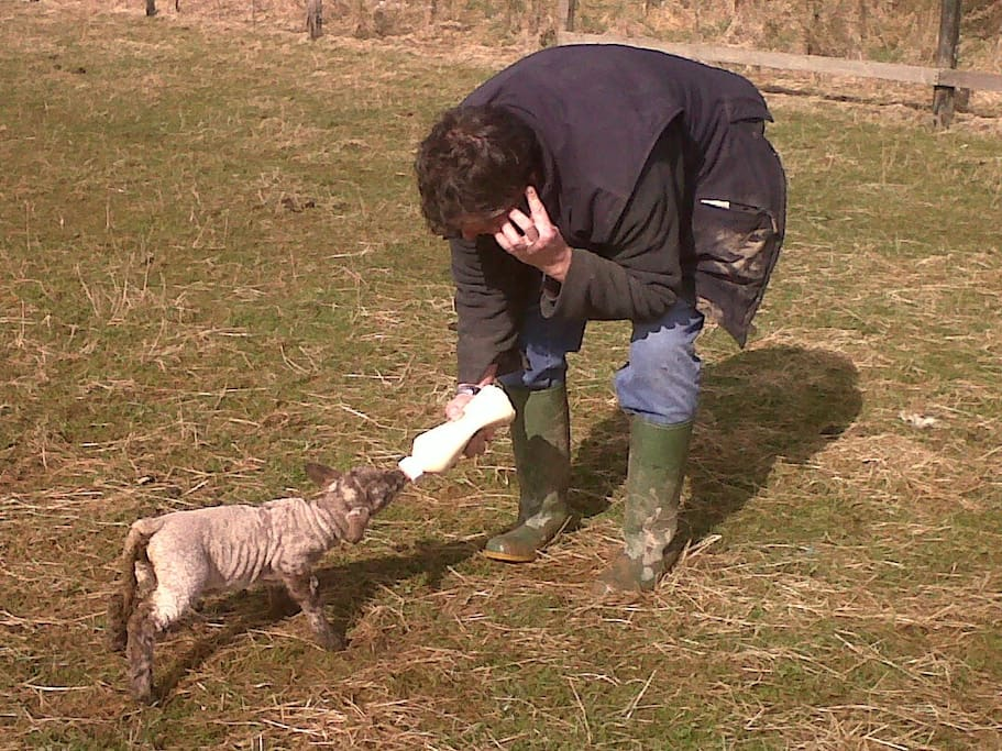 Tony and our pet sheep when he was but a lamb Biffo