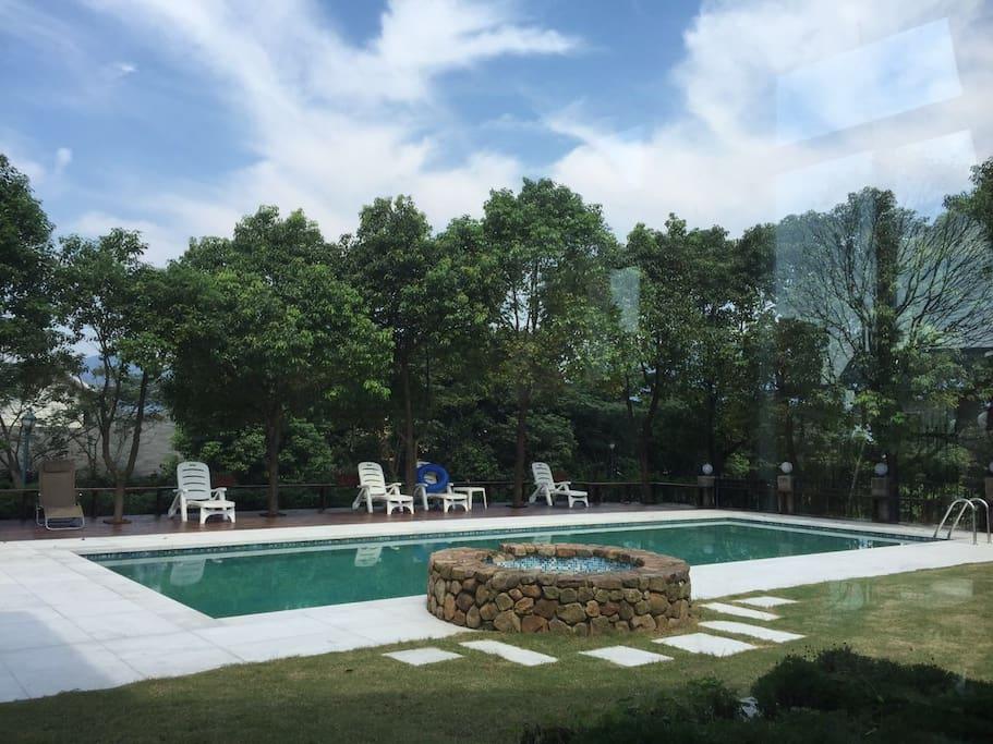 绿通身饱树下的泳池