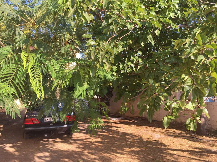 Free Parking under the fig trees, enjoy them for a snack.