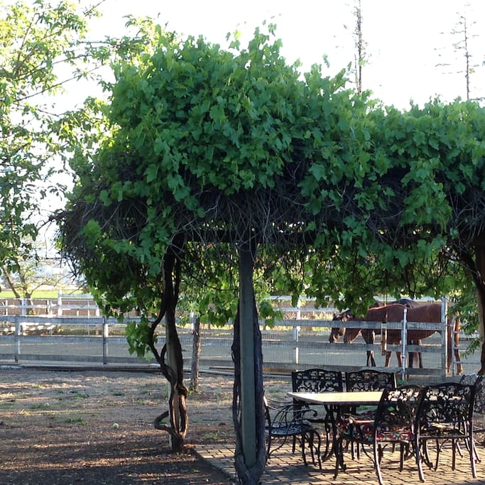 grape arbor patio dining with horses!