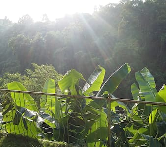 Jungle View Studio, a nature lovers paradise; 2 bedroom studio apartment located down 109 steps below the pool of the the beautiful Sunrise Villa Bali, breakfast is  served on your private jungle balcony to the sounds of the river and exotic birds..