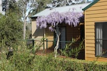 Many colours abound in springtime, not least of which is the delightful wisteria draping gracefully over the front verandah.